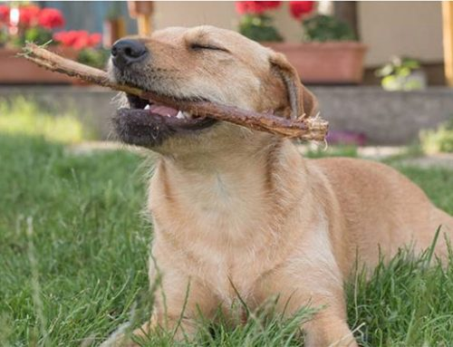 Why Do Dogs Eat Things They Shouldn't? Here's What to Do
