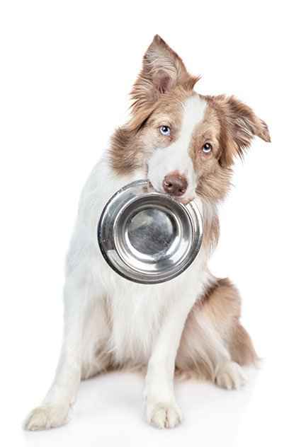 Dog with bowl in his mouth